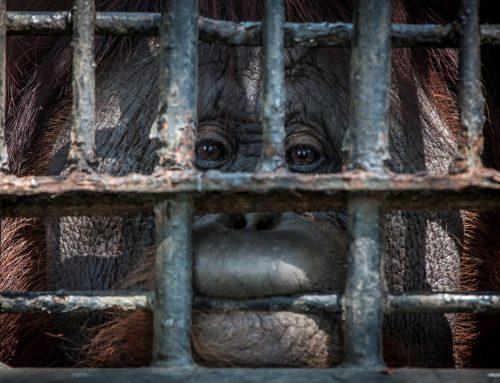 """Horrormoral"" Wildlife Tourism"