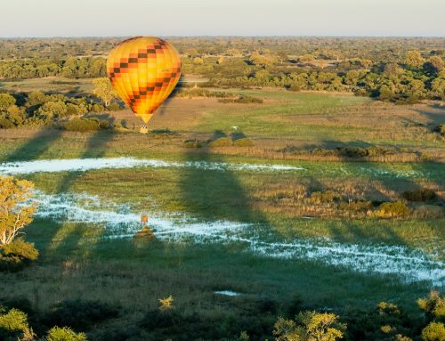 Wilderness Safaris- Unparalleled Okavango