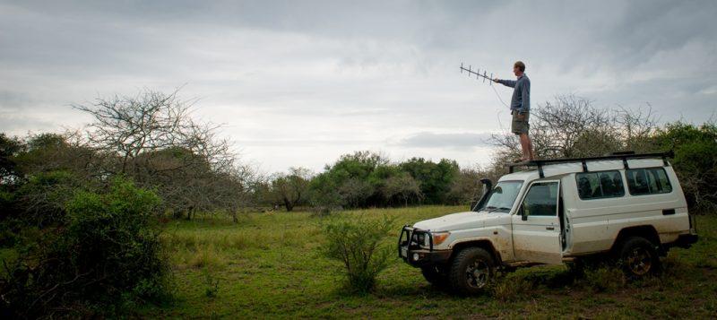 tracking-black-mamba