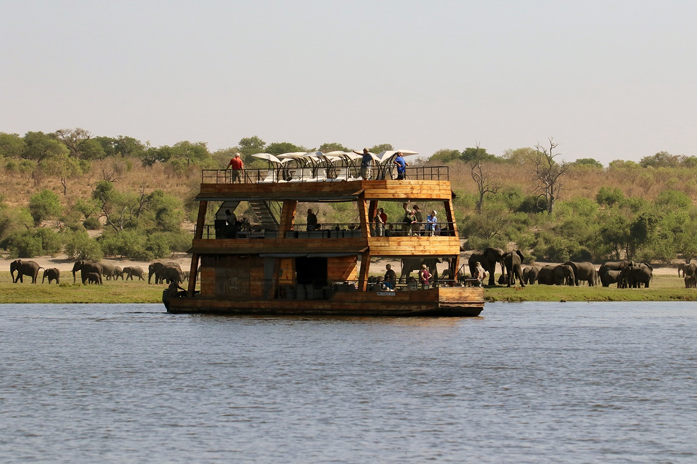 Chobe – What's The Buzz?
